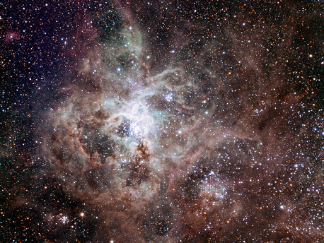 This first light image of the TRAPPIST national telescope at La Silla shows the Tarantula Nebula, located in the Large Magellanic Cloud (LMC) — one of the galaxies closest to us. Also known as 30 Doradus or NGC 2070, the nebula owes its name to the arrangement of bright patches that somewhat resembles the legs of a tarantula. Taking the name of one of the biggest spiders on Earth is very fitting in view of the gigantic proportions of this celestial nebula — it measures nearly 1000 light-years across! Its proximity, the favourable inclination of the LMC, and the absence of intervening dust make this nebula one of the best laboratories to help understand the formation of massive stars better. The image was made from data obtained through three filters (B, V and R) and the field of view is about 20 arcminutes across.