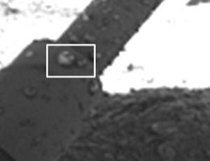 Flecken auf einem der Landebeine von Phoenix, die von den Forschern als Wassertropfen gedeutet werden.