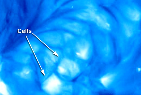 The camera shows the plumes changing to cells and back to plumes again, based on the observatory's perspective during the interval June 7-14, 2011. Credit: NASA/STEREO/NRL